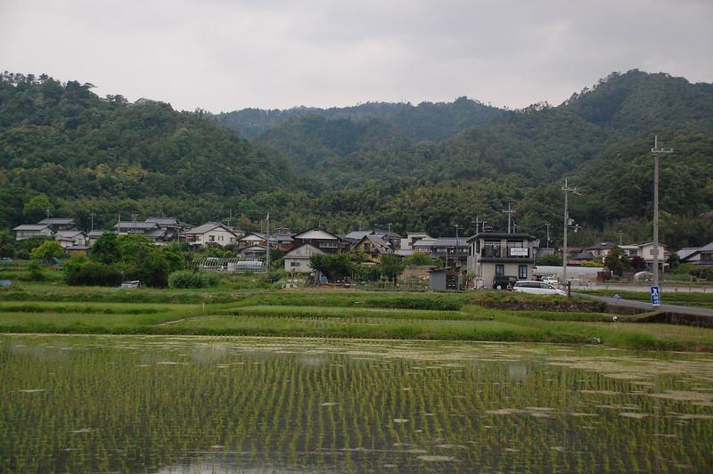 Rice Paddy near Miyazu