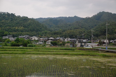 Rice Paddy near Miyazu