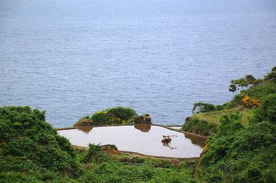 Rice paddy near Ine