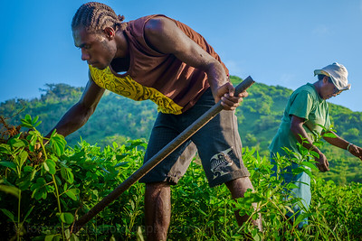 Vanuatu, Tanna, Tanna Farms, Peanut Harvest, 2016 Feb, #19