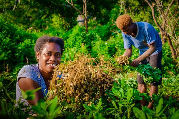 Vanuatu, Tanna, Tanna Farms, Peanut Harvest, 2016 Feb, #15