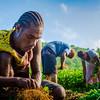 Vanuatu, Tanna, Tanna Farms, Peanut Harvest, 2016 Feb, #17