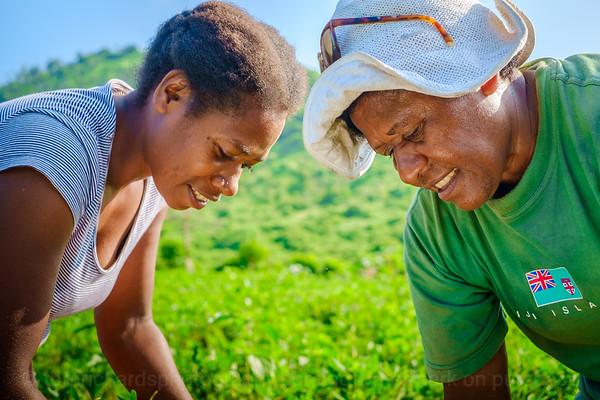 Vanuatu, Tanna, Tanna Farms, Peanut Harvest, 2016 Feb, #29