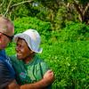 Vanuatu, Tanna, Tanna Farms, Peanut Harvest, 2016 Feb, #40