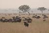 Wildebeest Western Serengeti Migration Tanzania