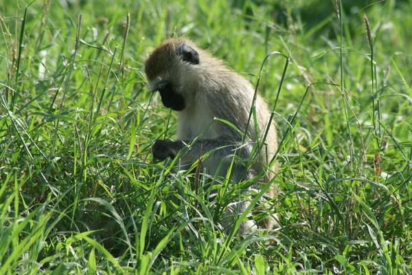 Tanzania Safari:  Tarangire & Lake Manyara