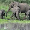 Elephant Play Pool Tarangire