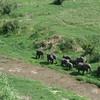 Elephants exploring Tarangire River