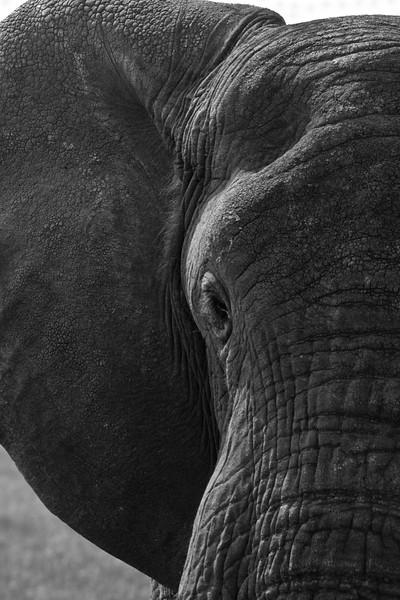 Tanzania, Africa - Safari