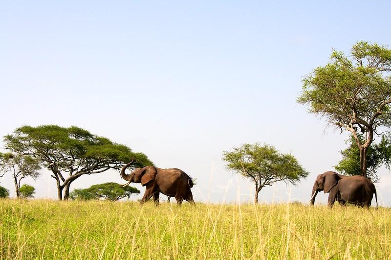Dorobo Tanzania 2012