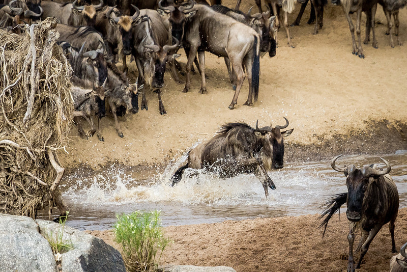 130809_Tanzania_2013-card4563