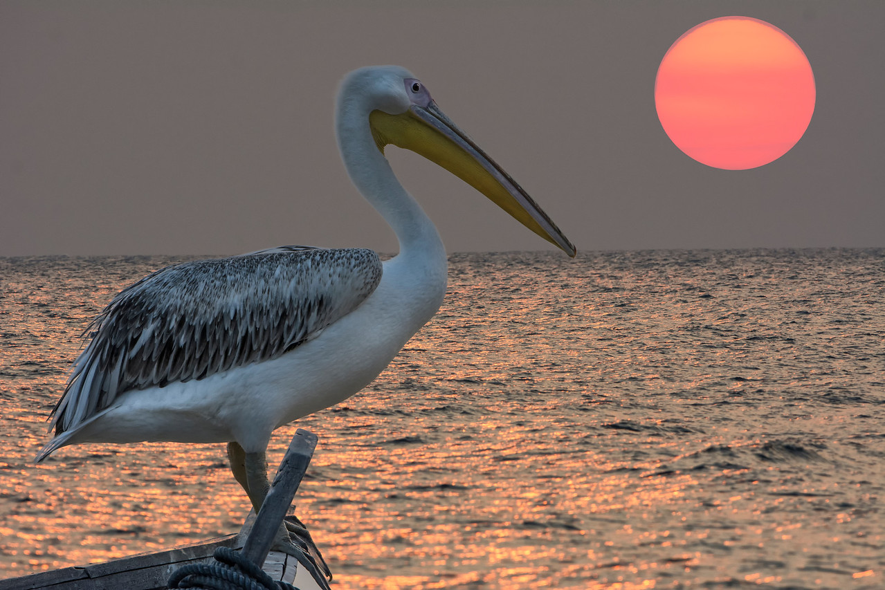 7-21-14 Big Bird-GreystokeMahale Sunset