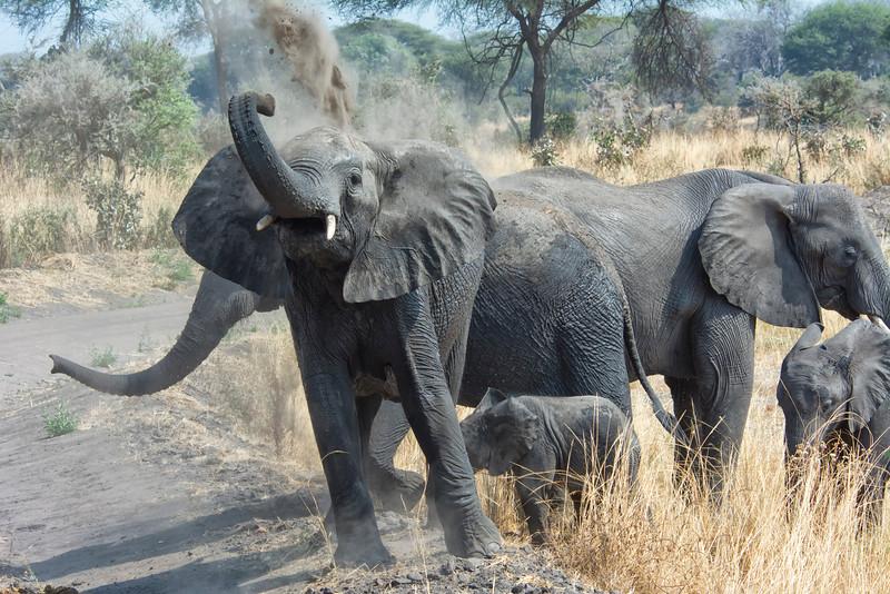 Elephant bath-3