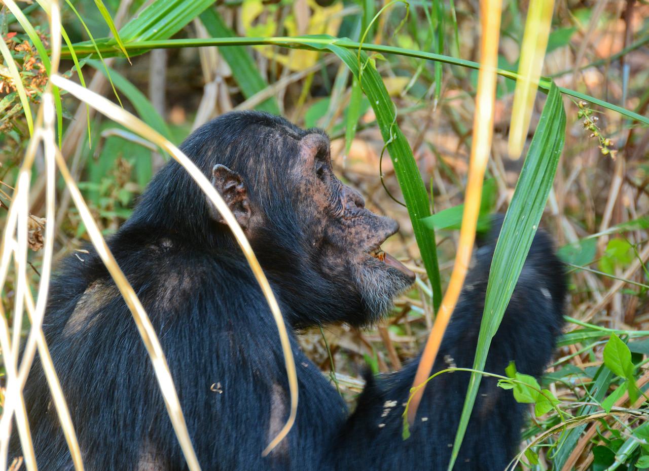Darwin chewing-TZA_2386