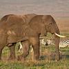 Grace And Elephance