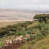 Maasai transport