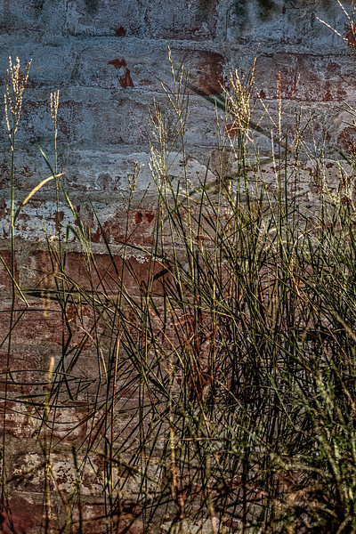 Aded the brick wall in post production.  Just playing around with image