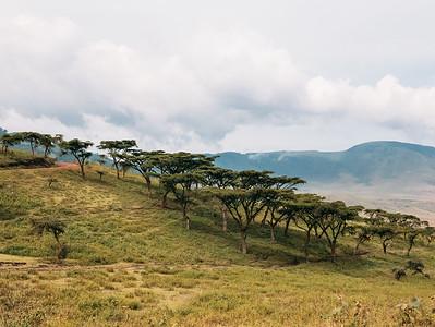 Ngorongoro hillside