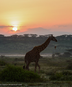 Ndutu Sunrise - Ndutu, Tanzania, Africa - Darren Stratemeier - January 2016