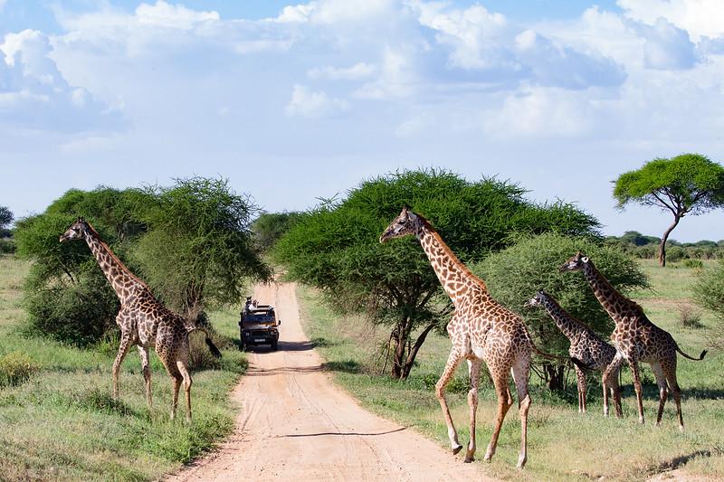 safaritanz@gmail.com