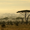 Misty African Morning