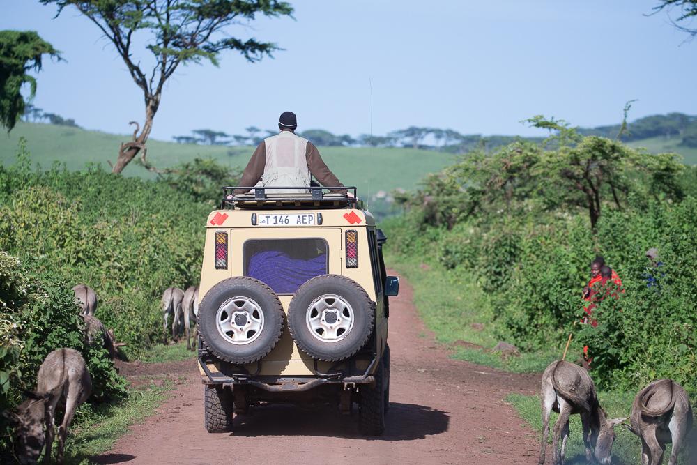 860-230-8180 safaritanz@gmail.com www.eaps1.com