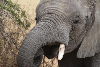 Tanzania Safari - Serengeti