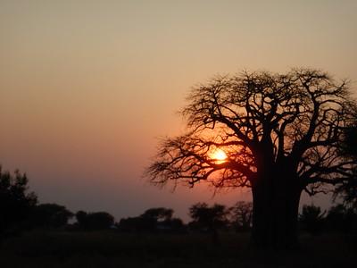 Tanzania Safari - Tarangire
