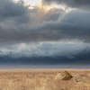 A pride male lion with the  cloud-covered walls of the Ngorongoro crater behind