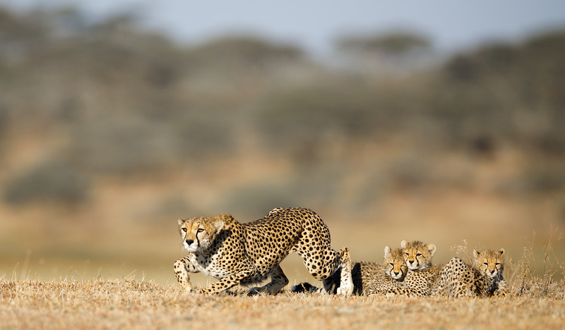 She had seen some impala, but they were too far away for her to catch