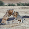 Brothers play-fighting