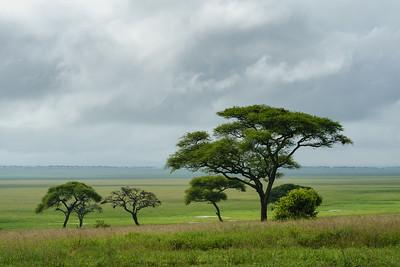 Landscape, Tarangire