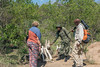 Guide and tourist examining giraffe skelton with a ranger 1, Arusha NP, Tanzania
