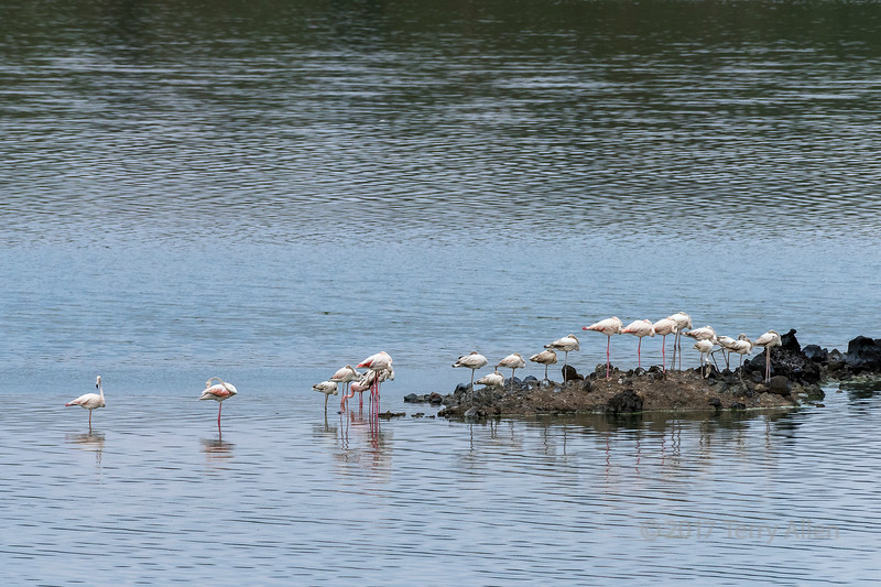 Flamingos (Phoenicopterus minor) in Momela Lake, Arusha National Park, Tanzania