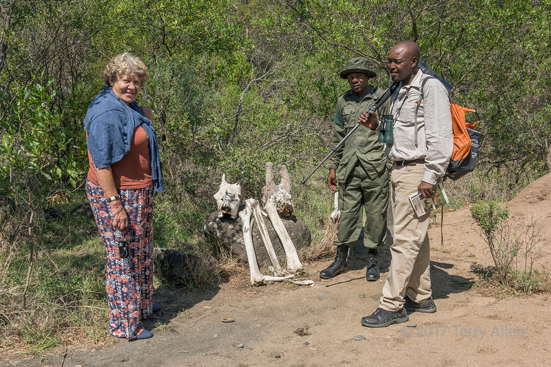 Guide and tourist examining giraffe skelton with a ranger 2, Arusha NP, Tanzania