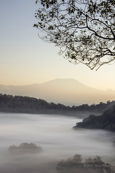 Mount Kilimanjaro and the mists of Ngurdoto Crater in the early morning sun, vertical, Arusha NP, Tanzania