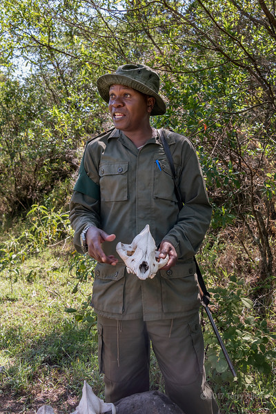 Ranger with hyena skull, Arusha NP, Tanzania