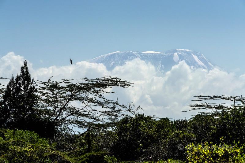 Mount Killimanjaro seen from Arusha National Park, Tanzania