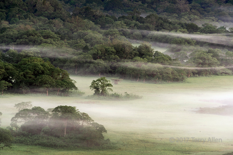 Mixed forest and mists in the Ngurdoto Crater, early morning, Arusha NP, Tanzania