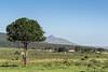 View towards Momela Gate, Arusha NP, Tanzania