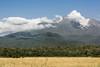 Mount Meru with golden grasses, Arusha NP, Tanzania