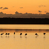 Serengeti flamingos