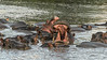 Late afternoon dominance activity, Hippo Pool, Grumeti Serengeti Tented Camp, Tananzia
