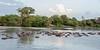 Huge pod of hippos, Hippo Pool, Gumeti Serengeti Tented Camp, Tanzania