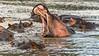 Late day dominance display, Hippo Pool, Gumeti Serengeti Tented Camp, Tanzania