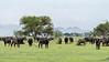 Herd of Cape buffalo in spring grasses, Grumeti Game Reserve, Serengeti, Tanzania