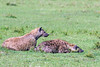 A pair of spotted hyenas on alert, Gumeti Game Reserve, Serengeti, Tanzania