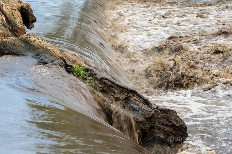 Log washed down in a flood with grass, Grumeti River, Grumeti Game Reserve, Serengeti, Tanzania