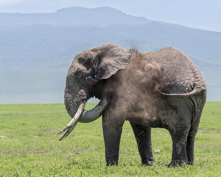 Large elephant starting to have a dust bath 2, Ngorongoro Caldera, Tanzania
