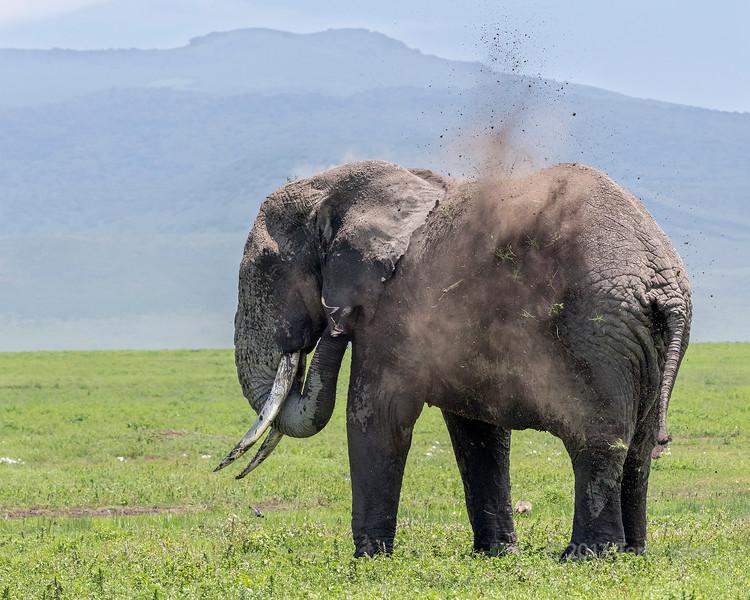 Large elephant starting to have a dust bath 3, Ngorongoro Caldera, Tanzania
